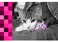 Mijn kitten klimt in gordijnen - Kattenforum De Kattensite