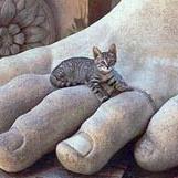 Oorsprong van de huiskat