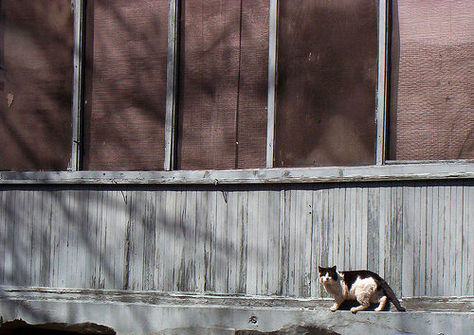 Kat bij een huis