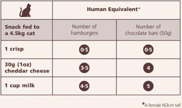 Hoeveelheden voer kat/mens
