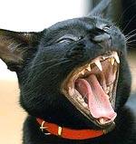 Kattengebit