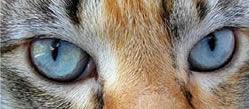 Ogen van een kat