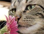 Kat ruikt aan bloem
