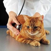 Als uw kat geopereerd moet worden