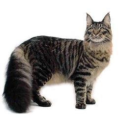 Kattenrassen - De Katt...