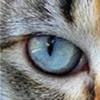 Ogen van de kat