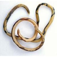 Spoelwormen