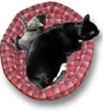 Kat of kitten