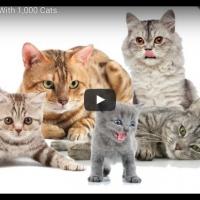 De '1000 katten'-vrouw