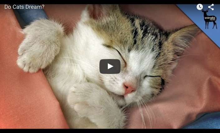 Dromen katten ook?