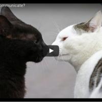Hoe katten communiceren