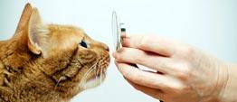 Rode kat ruikt aan stethoscoop