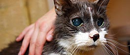 Vermagerde kat met slecht uitziende vacht