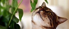 Kat ruikt aan een plant
