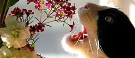 Kat met open bek hapt in bloemen