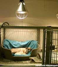Kittens bij moederpoes onder warmtelamp