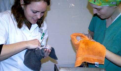 Assistente met pasgeboren kitten