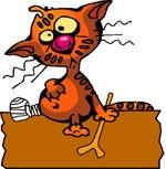 EHBO - zieke kat