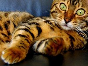 Kat met streepjes en stippenpatroon