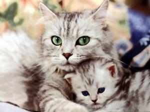 Moederpoes met kitten