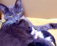 Een moederpoes met kittens