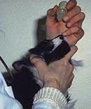 Interferon bij neusholte infectie bij de kat