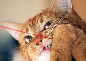 Kat speelt met touwtje