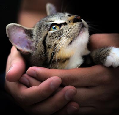 Kattenkopje in handen
