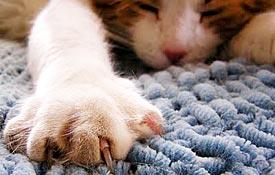 Close up van een kattenpoot
