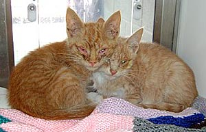 Kittens met niesziekte