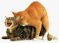 Parende katten
