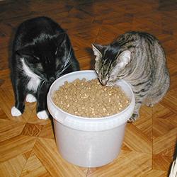 Katten krijgen wel heel veel brokjes