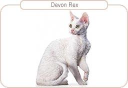 Kattenras Devon Rex
