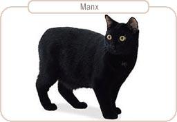 Kattenras Manx