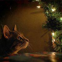 Mijn mooiste kerst