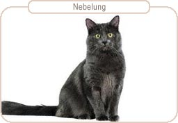 Kattenras Nebelung