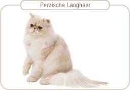 Kattenras Perzische Langhaar