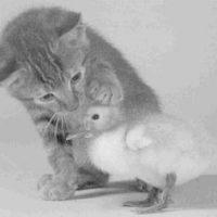Babyvogel