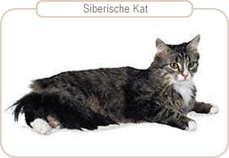 Kattenras Siberische Kat