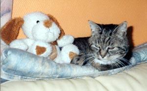 Column Feestmuis: Cyperse kat met knuffel