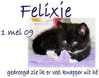Column Felixje (kitten)