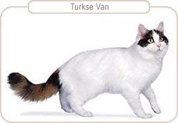 Kattenras Turkse Van
