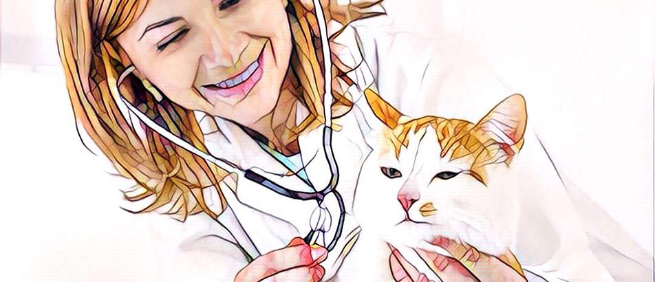 Kat bij de dierenarts