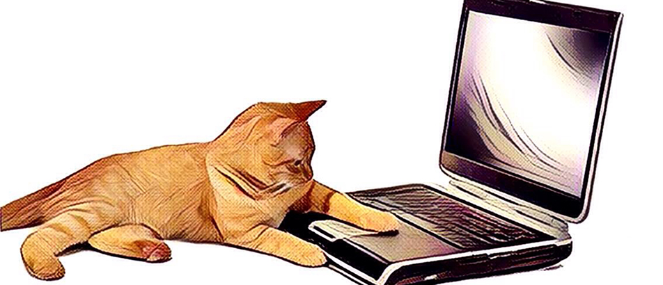 Kat aan de computer