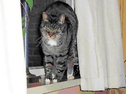 Column Onschuldig!: Kat met hoge rug