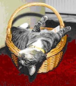 Column Onschuldig!: Kat slaapt ondersteboven