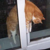 Kantelraam fataal voor katten
