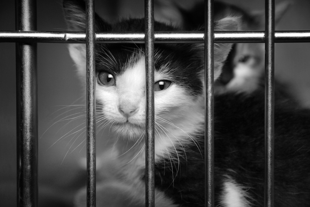 Kitten in een bench