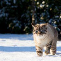 Bescherm je viervoeter tegen de sneeuw