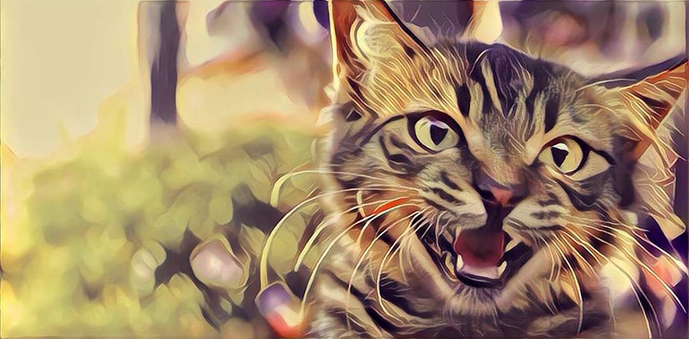 Miauwende kat